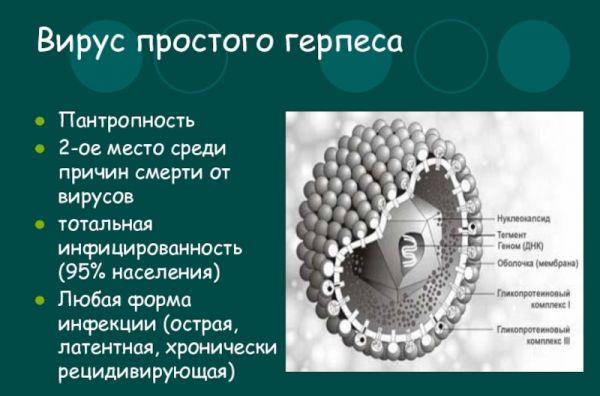 Вирус простого герпеса